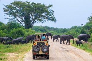 2 days Uganda wildlife safari Murchison Falls National Park