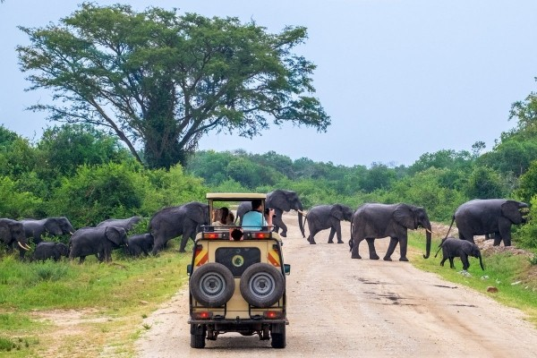 8 days Uganda wildlife safari Murchison Falls