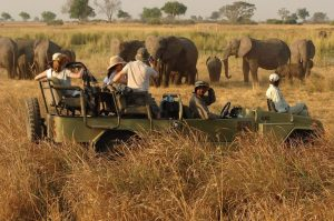 6 days Uganda wildlife safari Murchison falls and Kidepo valley national parks